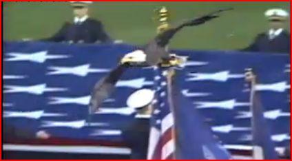 eagle patriot 1